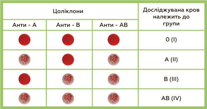 Визначення резус-належності та групи цоліклонами анти-А, анти-В і анти-D