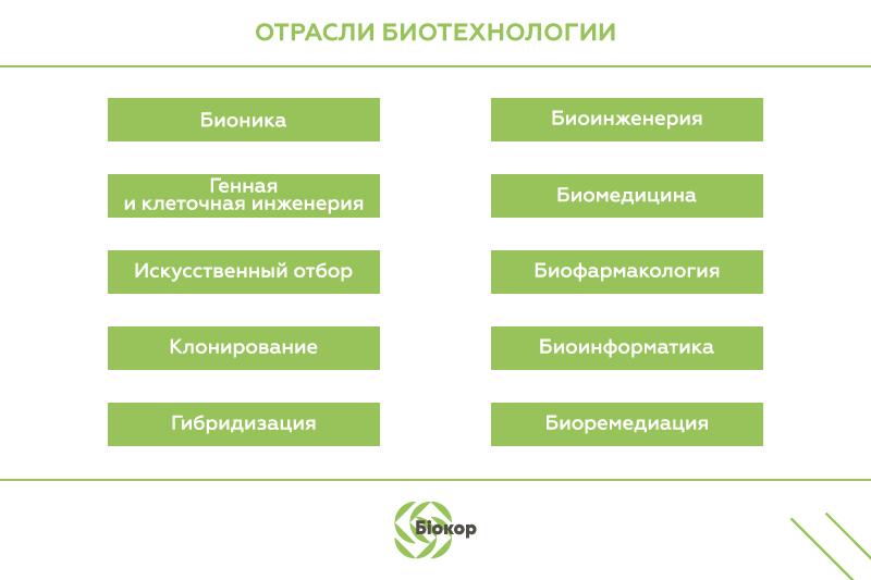 Методы и основные направления биотехнологии