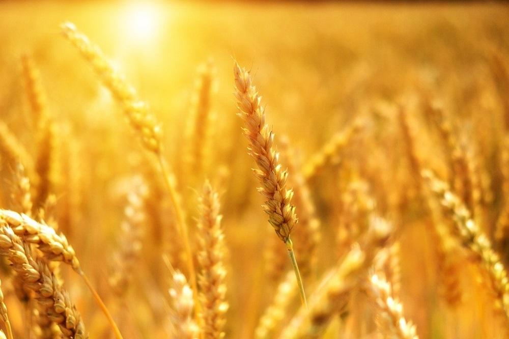 Проверка качества зерна