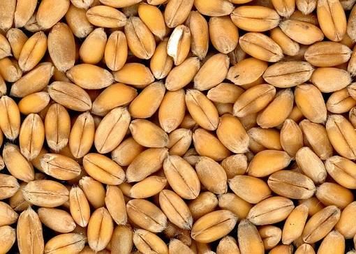 Показатели качества зерна